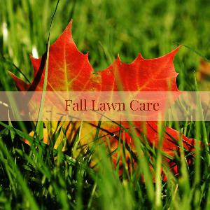 Let's talk for a minute about fall lawn care. . .
