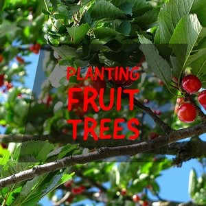 Let's talk for a minute about planting fruit trees. . .