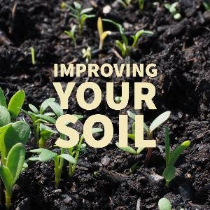 Let's talk for a minute about improving your soil. . .