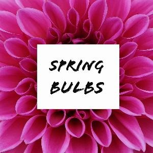 Let's talk for a minute about spring bulbs. . .