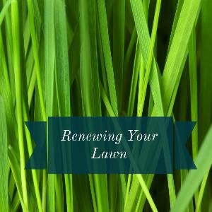 Let's talk for a minute about renewing your lawn. . .