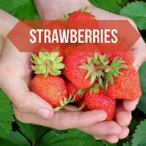 Let's talk for a minute about strawberries. . .