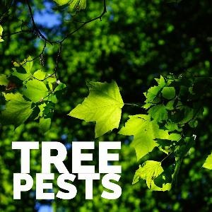 Let's talk for a minute about tree pests. . .