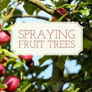 Let's talk for a minute about spraying fruit trees. . .