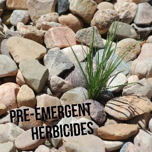 Let's talk for a minute about pre-emergent herbicides. . .