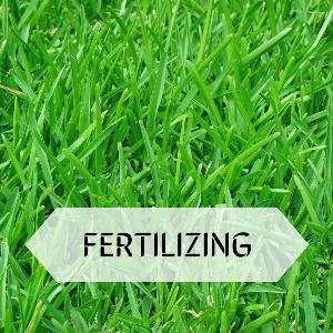 Let's talk for a minute about fertilizing. . .