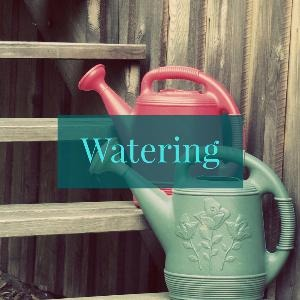 Let's talk for a minute about watering. . .